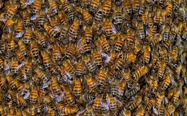 ext nuante descendance pour l esp rance de vie d une abeille mieux vaut ne pas naitre en t. Black Bedroom Furniture Sets. Home Design Ideas